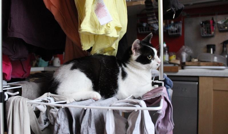 Jeannot, mâle, 15.06.2011, noir et blanc  Img_3412