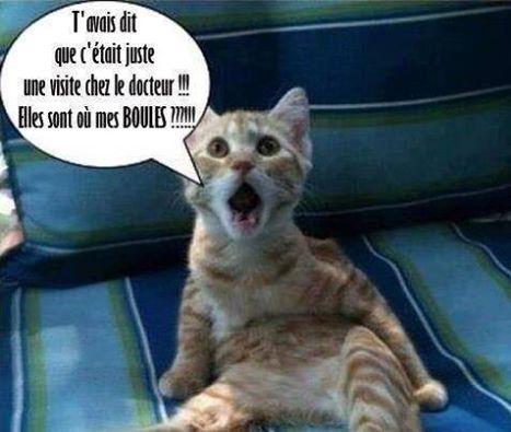 GRIBOUILLE, adorable chaton marbré de 10 semaines Mesbou10