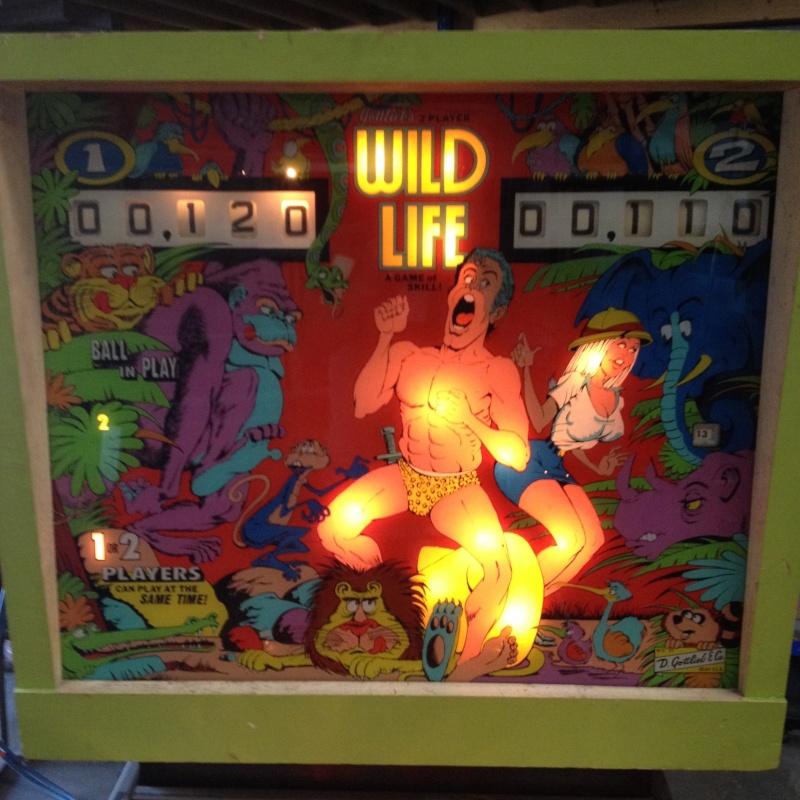 Un pit nouveau Wild Life  111