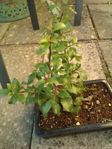 Mystery Tree Help please  Mp310