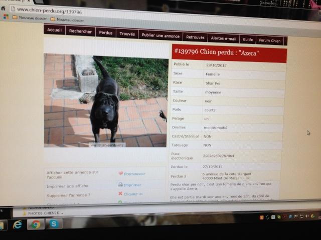 chien perdu à Mont de Marsan AZERA 01011