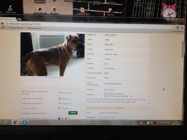 chien perdu  mâle le  4 novembre 2015 route de vienne 38670 Chasse sur rhone 02010