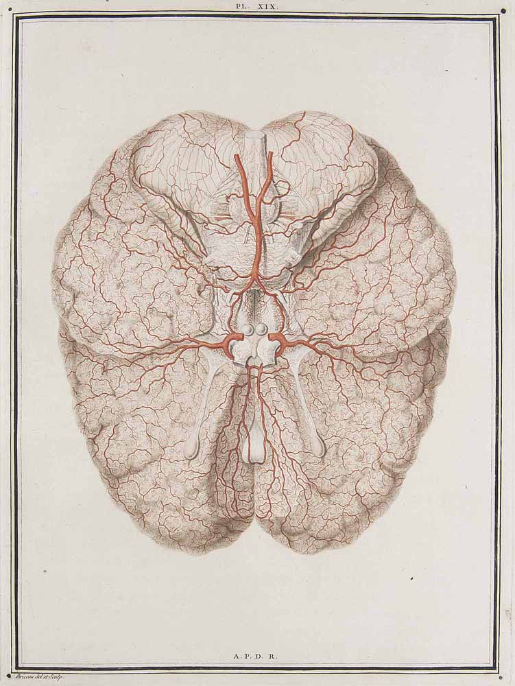 Ecrit et croquis du Médecin Vicq d'Azir 14462011
