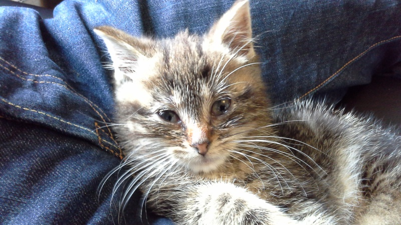 Loki le chaton 20151110