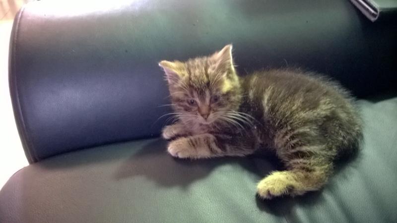Loki le chaton Wp_20110