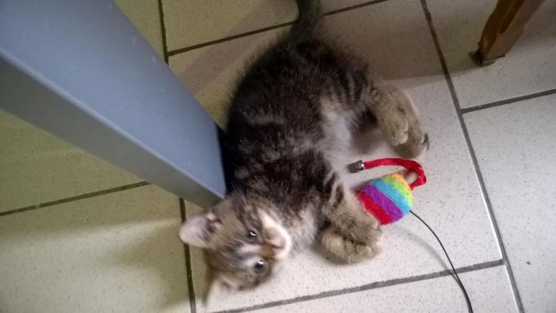 Loki le chaton Wp_20111