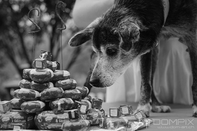 Floppy: le + vieux chien du monde pourrait être suisse! Floppy10