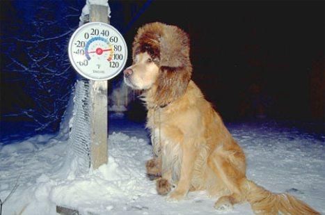 la meilleure monture pour votre H2 cet hiver... Dog-wi10