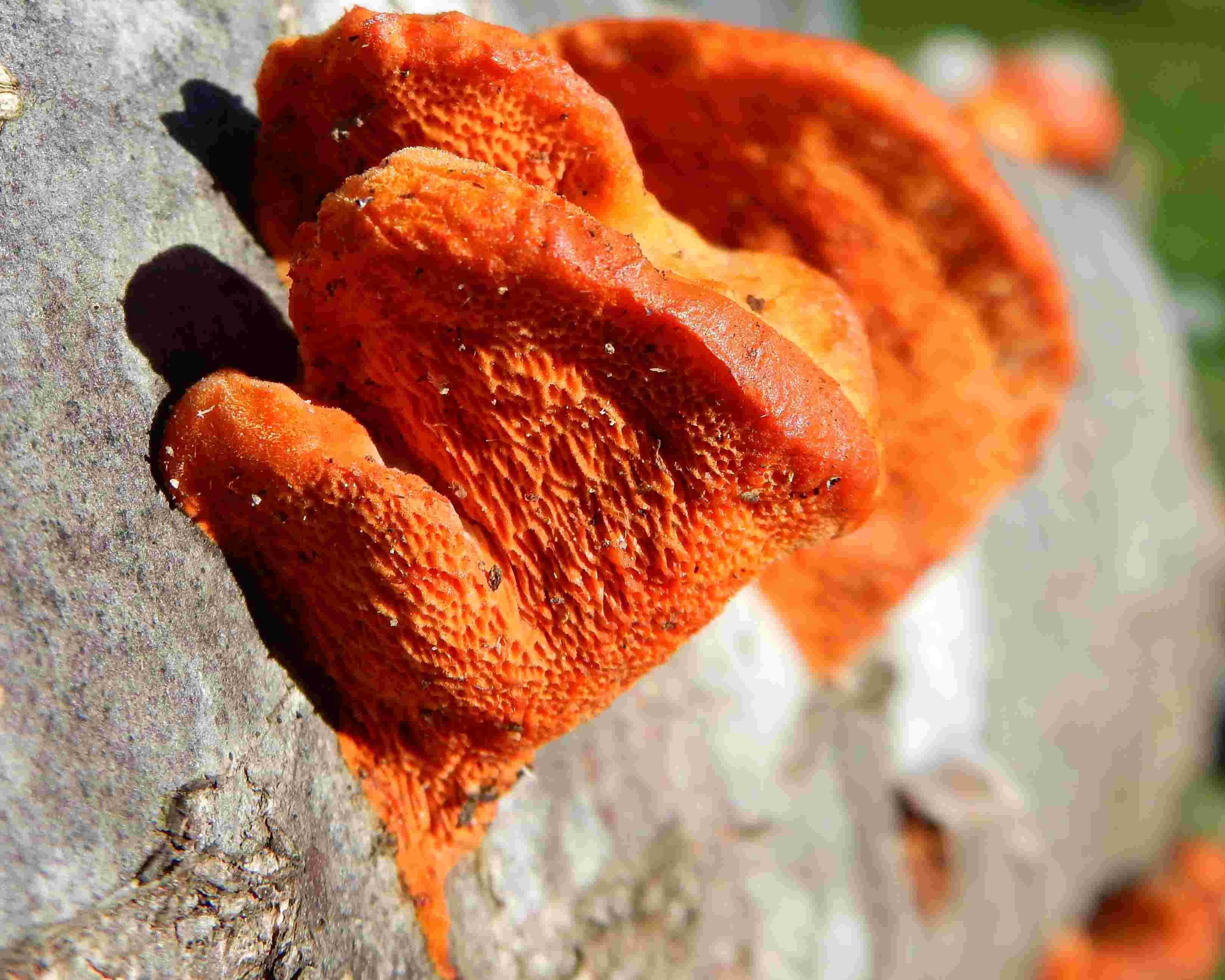 Un joli champignon 014_f11
