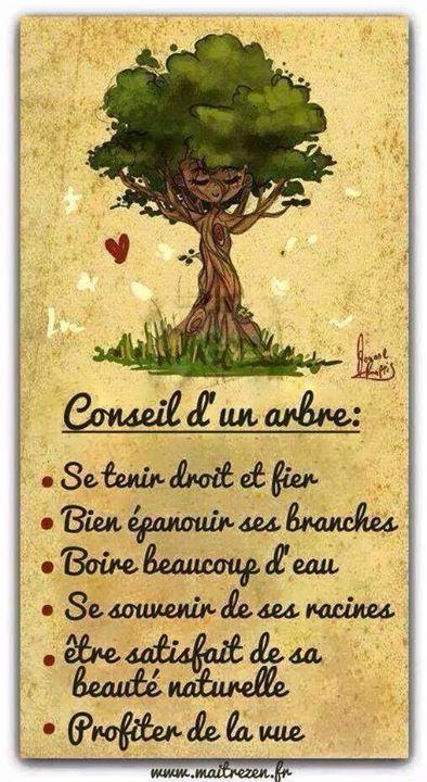 Les arbres sont de bon conseil... 12096310