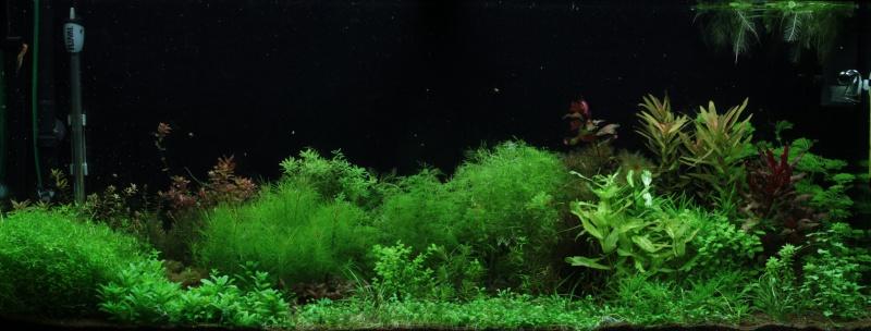 Ma passion pour les plantes aquatiques! - Page 5 Img_5112