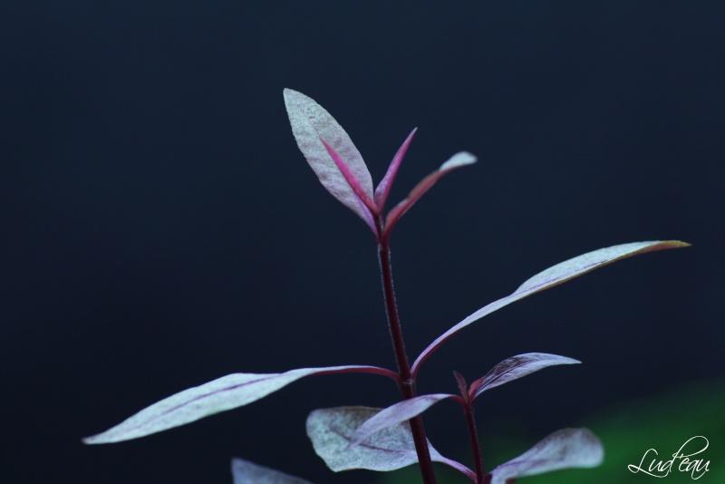 Ma passion pour les plantes aquatiques! - Page 5 Img_5312