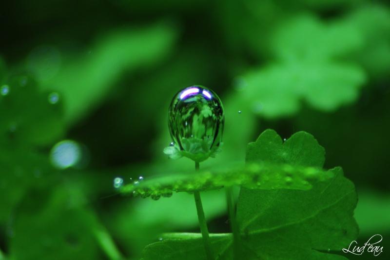 Ma passion pour les plantes aquatiques! - Page 5 Img_5410