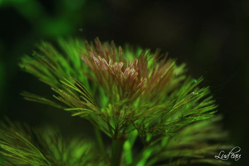 Ma passion pour les plantes aquatiques! - Page 5 Img_5512