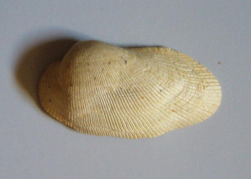 Identification fossile du bassin parisien N°3 P1090210