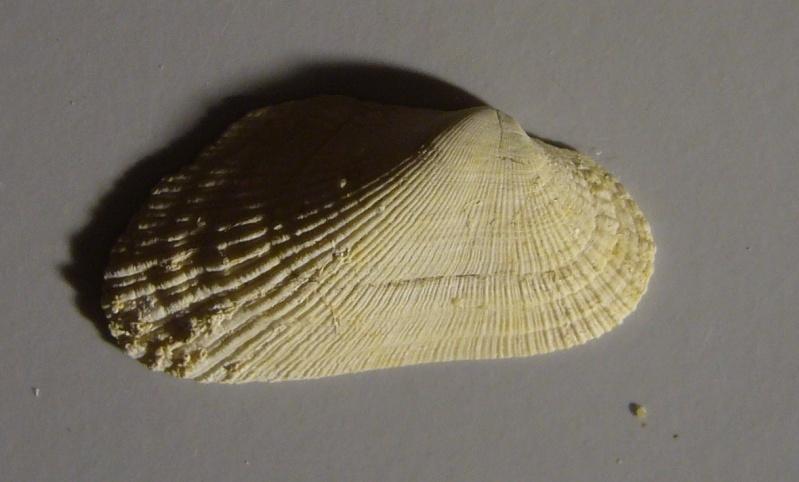 Identification fossile du bassin parisien N°04 P1100612