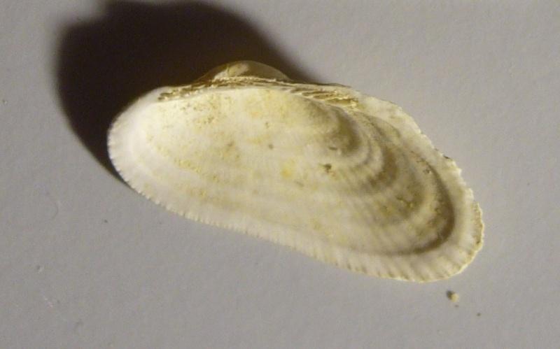 Identification fossile du bassin parisien N°04 P1100613