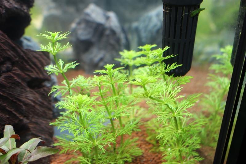 Quelle est cette plante? Img_4212