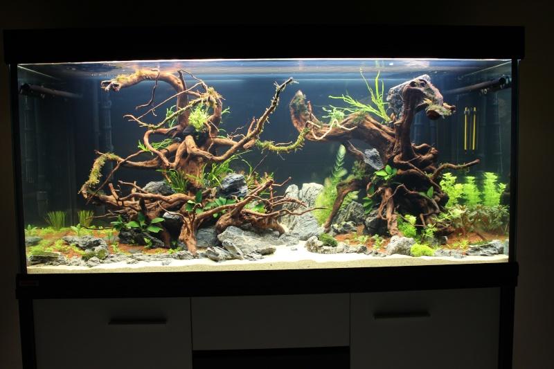 Mon aquarium 400 litres (vidéo page 5) - Page 2 Img_4213