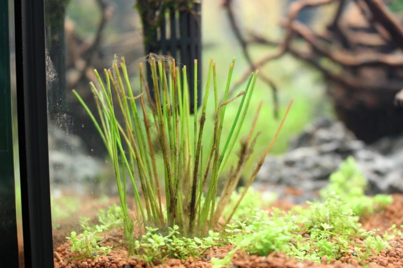 Mon aquarium 400 litres (vidéo page 5) - Page 2 Img_4221