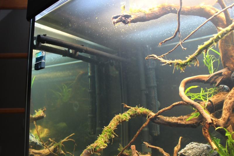 Mon aquarium 400 litres (vidéo page 5) - Page 2 Img_4222