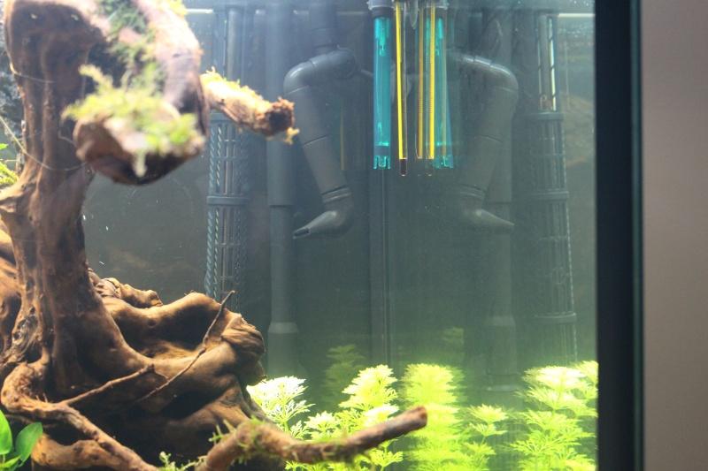 Mon aquarium 400 litres (vidéo page 5) - Page 2 Img_4223