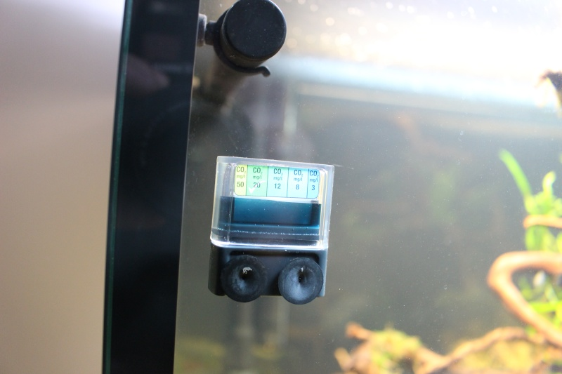Mon aquarium 400 litres (vidéo page 5) - Page 2 Img_4224
