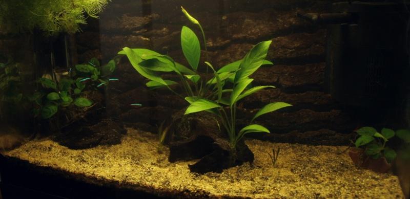 conseil pour des plantes basses 00810