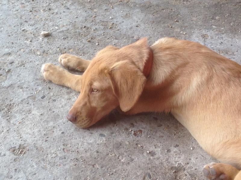 Tara - Adoptée Img_7911