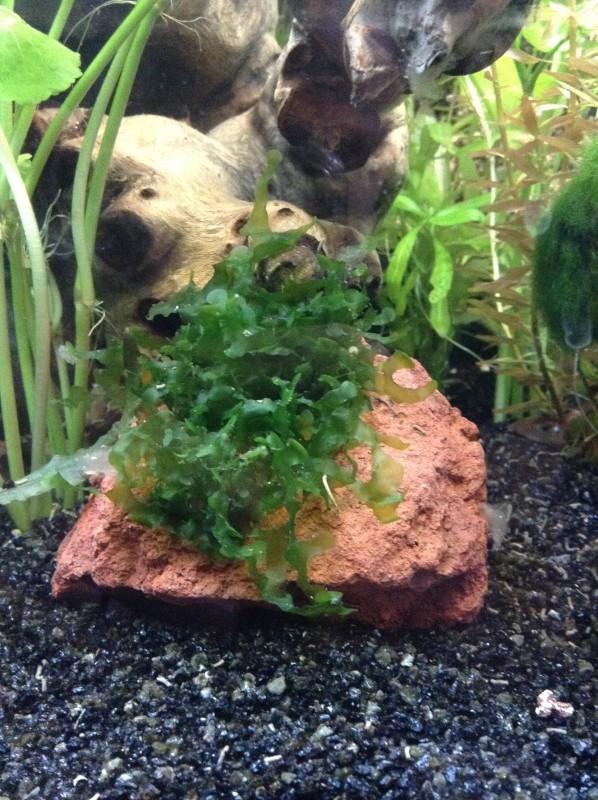 Présentation de mon aquarium Img_0413