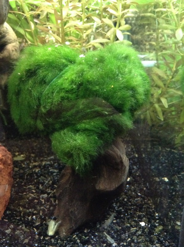 Présentation de mon aquarium Img_0414