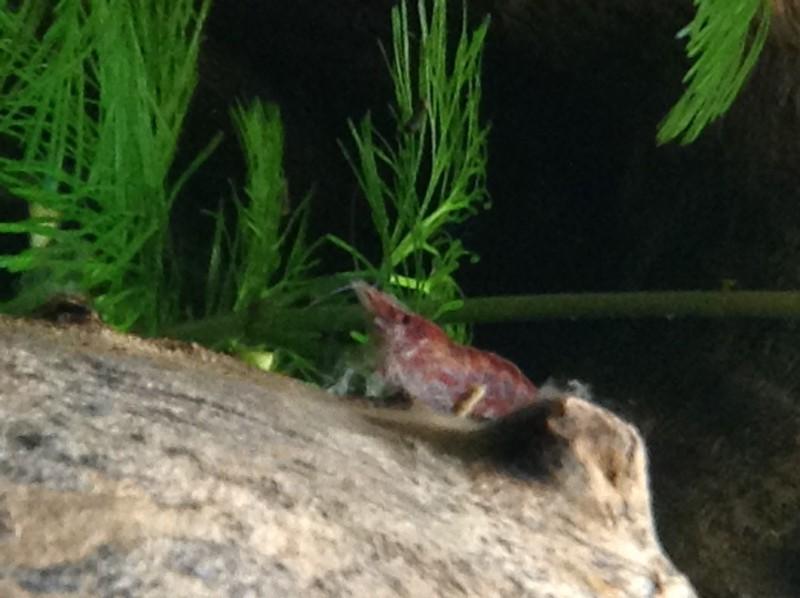 Présentation de mon aquarium Img_0416