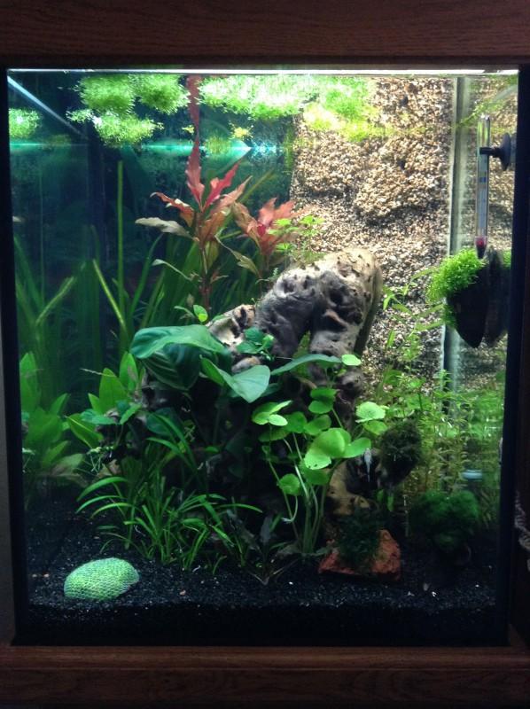 Présentation de mon aquarium Img_0417