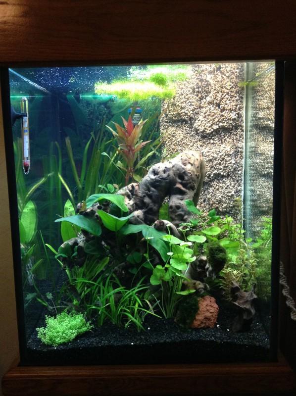 Présentation de mon aquarium Img_0418