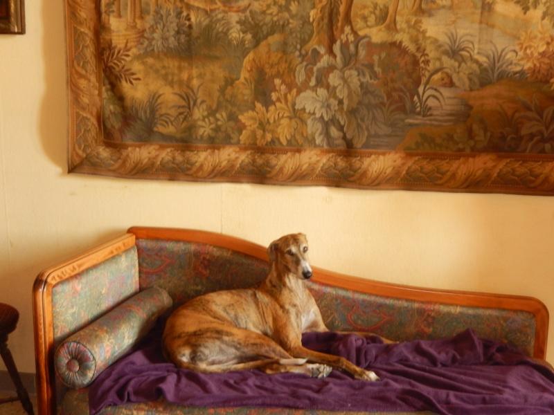 April – un amour de galga bringée/rousse Scooby France – Adoptée ! - Page 6 Dscn0410