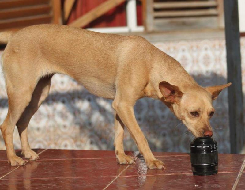 CINDY, petite chienne 35 cm 4 ans Cache101