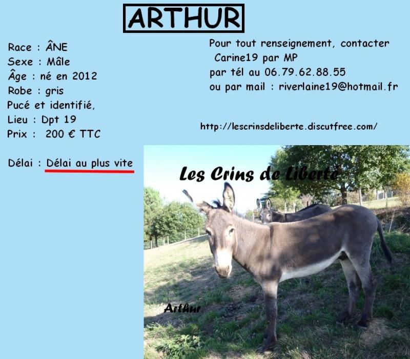 ECLYPSE, ETOILE, ESMEE, ARTHUR - Anes - Sauvés par Ségolène (2015) Artur_10