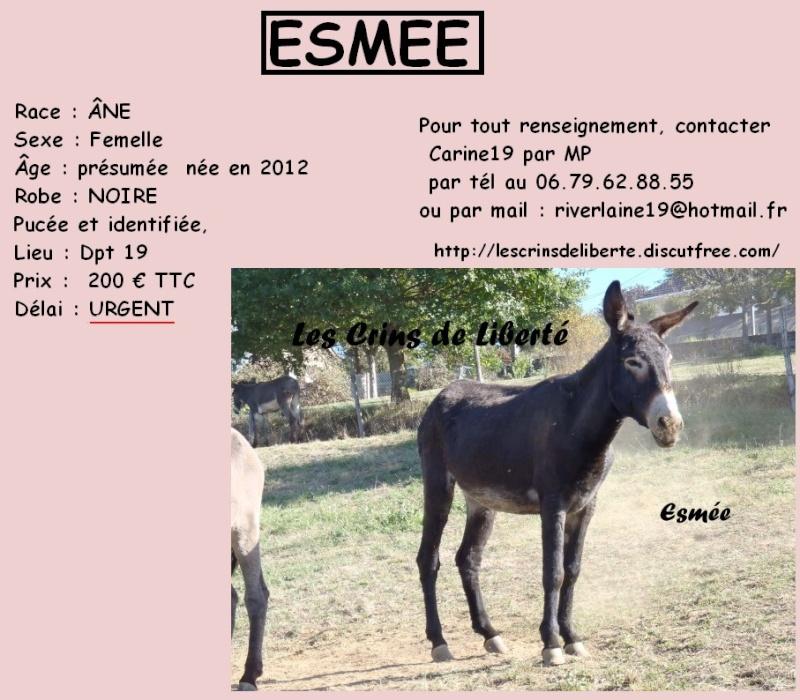 ECLYPSE, ETOILE, ESMEE, ARTHUR - Anes - Sauvés par Ségolène (2015) Esmeee10