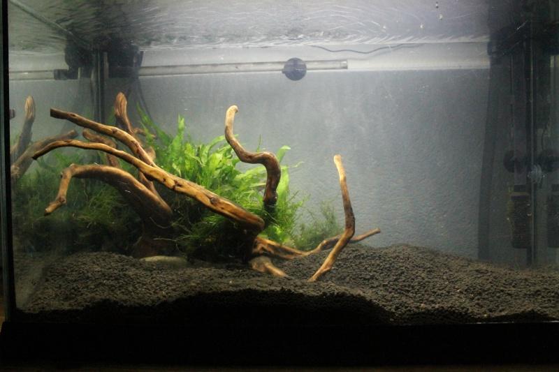 72 litres planté, Colisa - Corydoras Img_2414