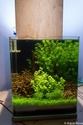 30L Dennerle Aquascaped - Page 2 28092010