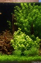 30L Dennerle Aquascaped - Page 2 28092011