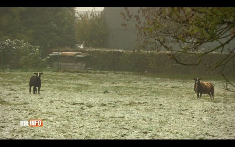 Météo: quelques flocons en Ardenne au petit matin, et après? Sans_t13