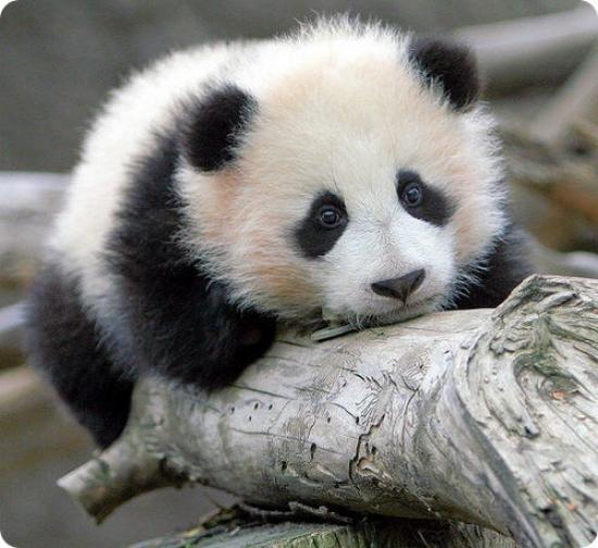 Bonsoir, c'est ici pour l'entretien ? Panda10