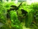 Histoire d'algues... comment s'en défaire ? Help ! Dscn3914