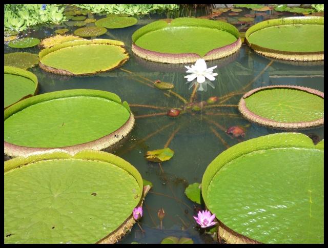 (24) Les Jardins d'Eau - Carsac-Aillac (Sarlat) Nynu_110