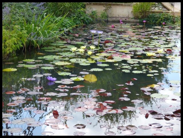 (24) Les Jardins d'Eau - Carsac-Aillac (Sarlat) Nynu_310