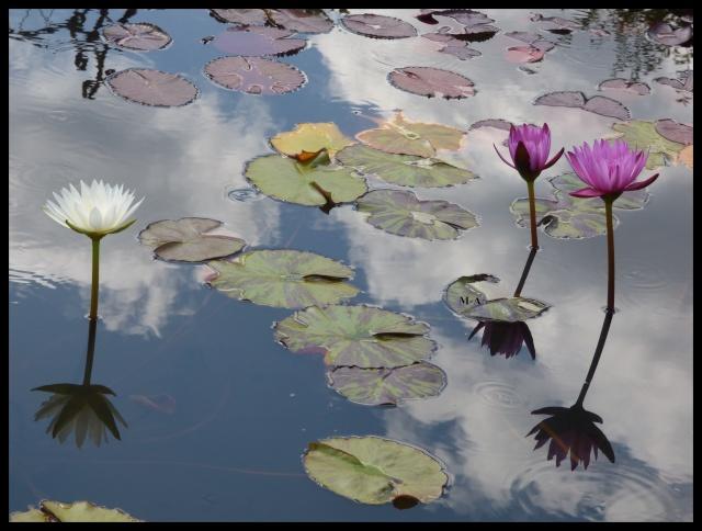 (24) Les Jardins d'Eau - Carsac-Aillac (Sarlat) Nynu_412