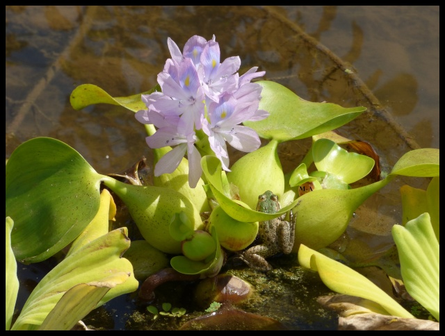 (24) Les Jardins d'Eau - Carsac-Aillac (Sarlat) Nynu_510
