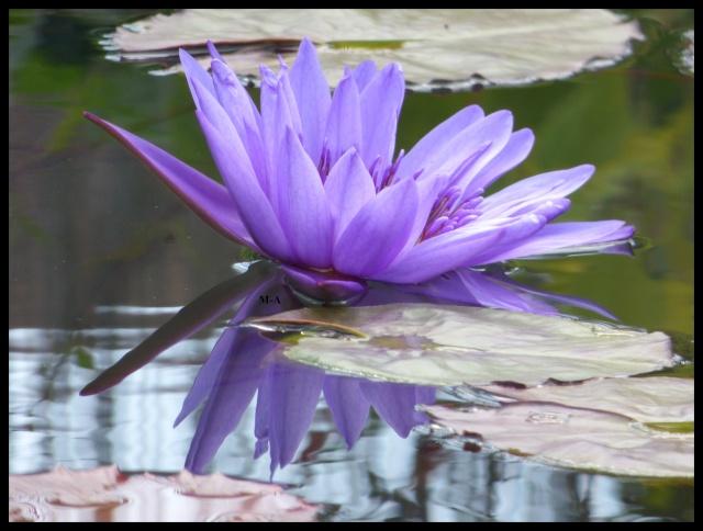 (24) Les Jardins d'Eau - Carsac-Aillac (Sarlat) Nynu_611