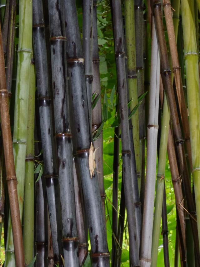 (24) Bambouseraie de Planbuisson - Le Buisson de Cadouin P1020210